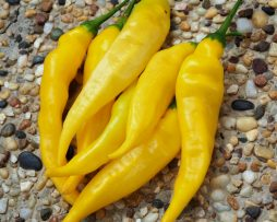 Aji Pineapple Chilli Seeds Chilli seeds in Australia