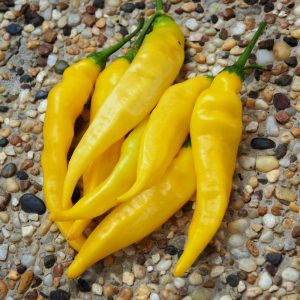 Aji Pineapple Chilli Seeds