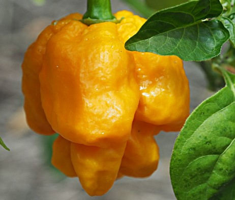 Yellow 7 Pot