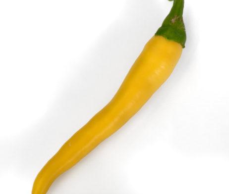 Ljuti Chilli Pepper Seeds