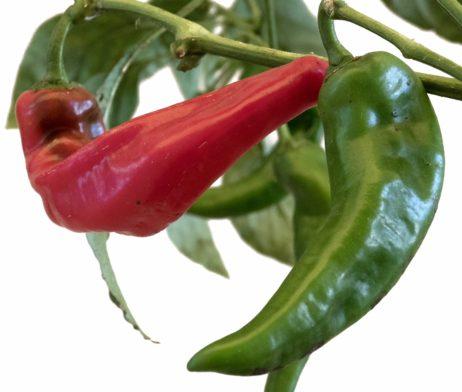 Krimzon Lee Chilli Seeds