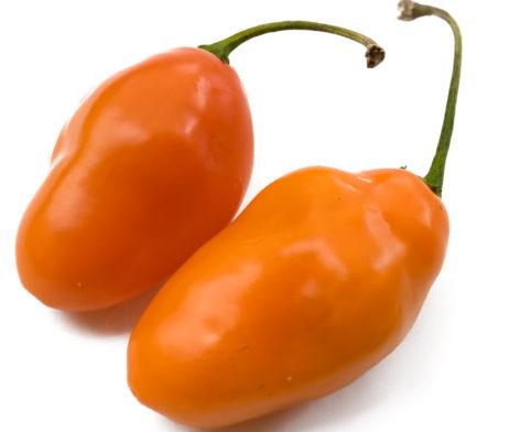 Orange Torpedo Rocoto Chilli Seeds