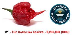 Carolina Reaper Chilli