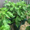 Butch T Plant