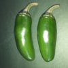 Jalepeno Green Chilli Pepper Seeds