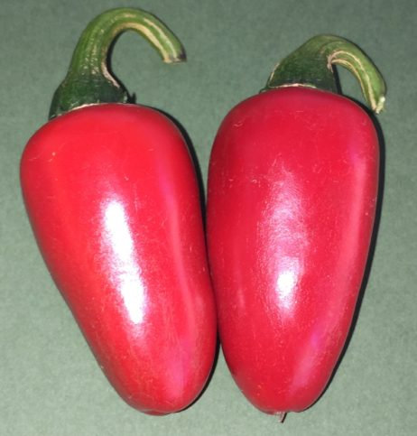 Jalepeno Red Chilli Pepper Seeds