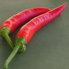 Yalova Charleston Chilli Pepper