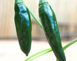 Turkish Sweet Green Chilli Seeds