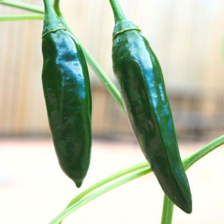 Turkish Sweet Green Chilli Seeds