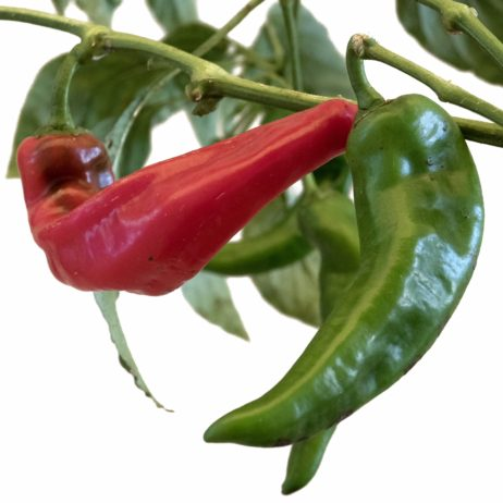 Krimzon Lee Chilli Seeds