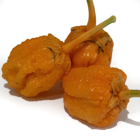 BBG Pumpkin Chilli Seeds