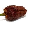 BBG Chocolate Naga Chilli Seedz