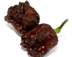 Chocolate Carolina Reaper Seeds