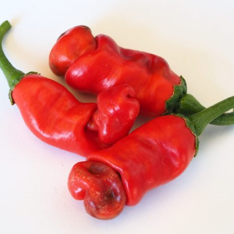 Penis Pepper Chilli